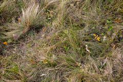 Leaves on grass. royalty free stock photography