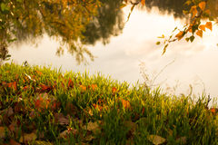 Leaves in grass, and water reflection Royalty Free Stock Images
