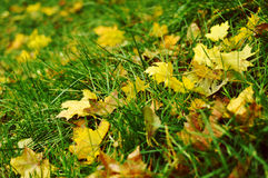 Leaves on the grass Stock Images