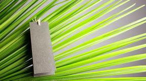 Leaves and gray card. Royalty Free Stock Photos