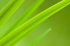Leaves green bakcground. Leaves close-up as a colorful green background royalty free stock photos