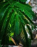 The leaves. The green beauty royalty free stock image