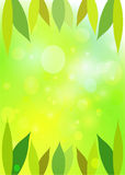 Leaves  green bokeh. Royalty Free Stock Photography