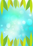 Leaves  green bokeh. Royalty Free Stock Image