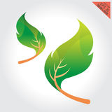 Leaves green design elements This image a vector illustration Royalty Free Stock Photography