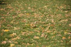 Leaves on green royalty free stock photography