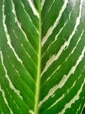 Leaves. Green florals colorgreen tree Royalty Free Stock Image