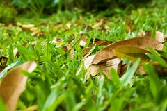Leaves on green grass Royalty Free Stock Images