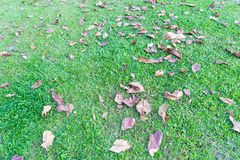 Leaves on green grass floor nature background. stock photo