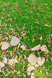 Leaves on green grass Stock Photos