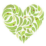 Leaves green heart shape with ladybugs Royalty Free Stock Image