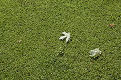 Leaves on green lawn Stock Image