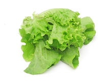 Leaves of a green lettuce Stock Images