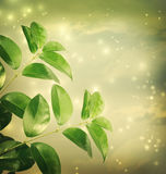 Leaves with green lights Background Royalty Free Stock Photos