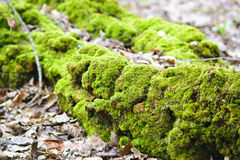 Leaves & green moss stock photography