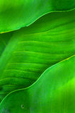 Leaves. Green leaves in nature of art Royalty Free Stock Image