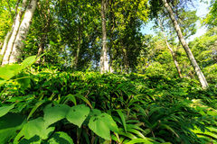 Leaves green. Nature trails in the rainforest Royalty Free Stock Image