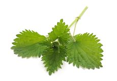 Leaves green nettle. On a white background stock photo
