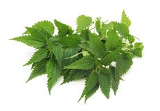 Leaves green nettle. On a white background royalty free stock photo