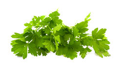 Leaves of green parsley Royalty Free Stock Photo
