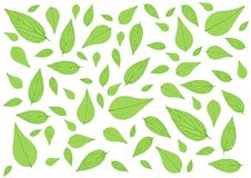 Leaves Green pattern and Many leaves on white background illustration stock illustration