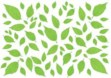 Leaves Green pattern on white background illustration dreamstime,com. Leaves Green pattern on white background illustration vector illustration