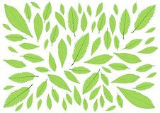 Leaves Green pattern on white background royalty free illustration