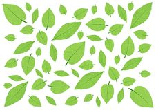 Leaves Green pattern on white background. Illustration Many leaves vector illustration