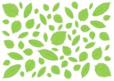 Leaves Green pattern on white background illustration dreamstime,com. Leaves Green pattern on white background illustration royalty free illustration