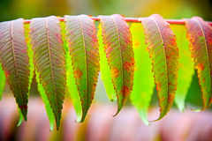 Leaves. Green and red autumn leaves Stock Image