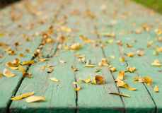 Leaves on green table blurred background Royalty Free Stock Photos