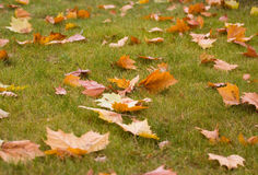 Leaves on the ground Royalty Free Stock Photography