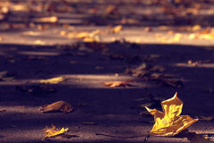 Leaves on the ground. Chesnut leaves leaf on the ground Royalty Free Stock Image