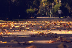 Leaves on the ground. Chesnut leaves leaf on the ground. Few people in the background Royalty Free Stock Photo