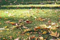 Leaves on the ground in autumn as a background royalty free stock images