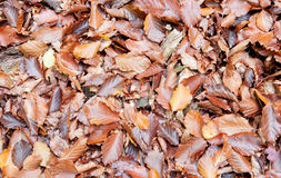 Leaves on the ground autumn for background Royalty Free Stock Image