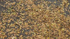 leaves on ground Stock Images