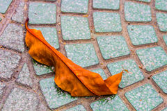 Leaves on the ground. Brown leaves on the modern ground Royalty Free Stock Photo