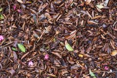 Leaves on the ground. Changing of seasons. Leaves scattered on the ground during changing of the seasons royalty free stock photography