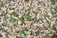 Leaves on the ground Stock Photos