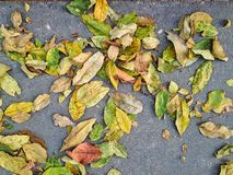 Leaves on ground. Leaf falling to floor Stock Images