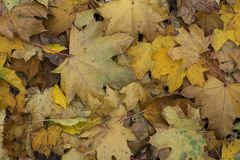 Leaves are on the ground Royalty Free Stock Photo