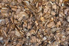 Leaves ground texture Stock Photography
