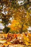 Leaves Ground Texture Detail Autumn Grass Fall Season Outdoors R Royalty Free Stock Photos