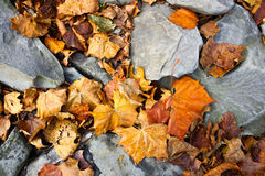 Leaves on groung. Yellow Gold Brown leaves on ground Stock Photography