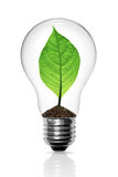 Leaves grow in a light bulb Stock Photos