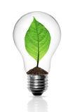 Leaves grow in a light bulb Stock Photos