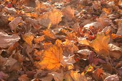 Leaves on the grown brown. Leafs on the grown, brown fall time of the year royalty free stock photo