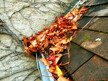 Leaves in the gutter Royalty Free Stock Photography