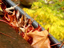 Leaves in the gutter. Gutter full of leaves following leaf fall in Autumn Royalty Free Stock Photos